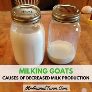 Illustration of Can I Give Milk That Has Been Milked For 1-2 Hours?