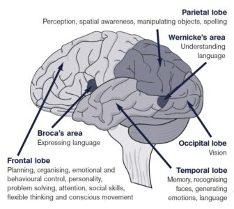 Illustration of Speech And Memory Problems After Head Banging?