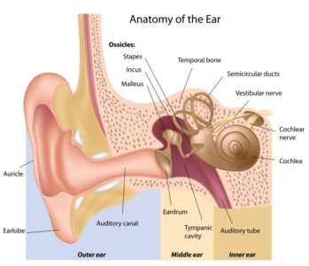 Illustration of Disorders Of The Ear?