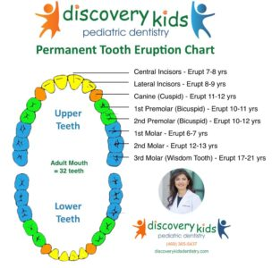 Illustration of Molar Tooth Growth At The Age Of 10 Years?