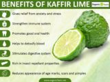Is Kaffir Lime Juice Should Not Be Taken With Amlodipine?