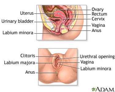 Illustration of Vaginal Lumps That Appear During Intercourse?