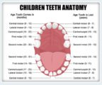 Dental Molars At The Age Of 13 Years?