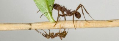 Illustration of Is A Bath Towel Surrounded By Red Ants A Sign Of Diabetes Symptoms?