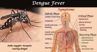 Illustration of What Are The Symptoms Of Dengue Mosquito Bite?