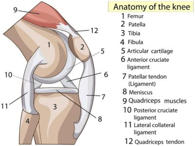 Illustration of How Do You Relieve Knee Pain After Doing Homework?