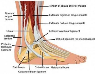 Illustration of What Is The Treatment For Ankle Injuries?