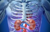 The Relationship Between Kidney Disease And Stomach Health?