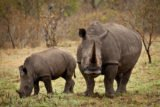 Rhinos Drug Dosage For Babies Aged 10 Months And Weighing 7.7kg?