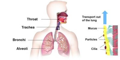 Illustration of HIV Transmission Through Mucus From The Throat?