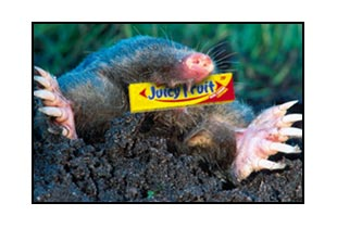 Illustration of A Mole That Will Escape By Itself?