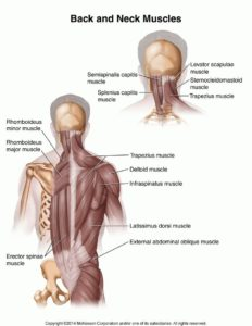 Illustration of All Muscle Spasms Due To Scapula Muscle Pain?