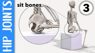 Illustration of Why Does Every Sit-up Of Bones And Joints Sit Like It Sounds?