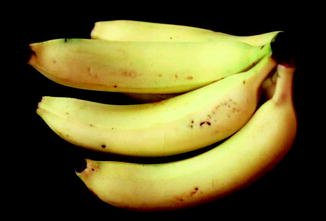 Illustration of Consumption Of Ambon Banana Syrup In Kidney Disease Sufferers?