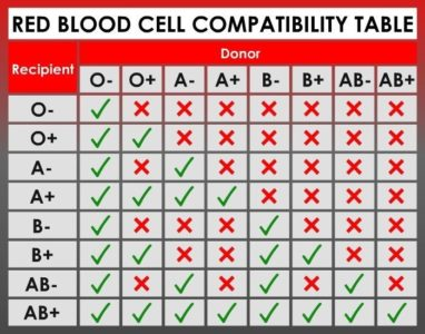Illustration of Is It Possible For A Partner With Blood Type O To Have Children With Blood Type AB?