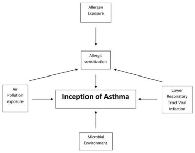 Illustration of Allergic Relationship With Shortness Of Breath?