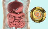 How Long Will The Worm Die After Consuming Worm Medicine?
