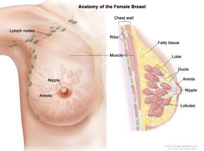 Illustration of Possible Pregnancy During Cancer Treatment?