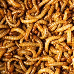 Illustration of Do Worms Need To Be Consumed Regularly If They Have Worms?
