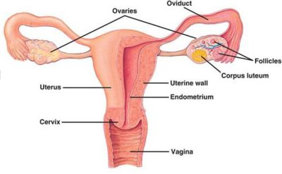 Illustration of Overcoming Enlarged Ovarian Cysts, Should Surgery?