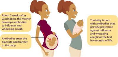 Illustration of Pertussis Vaccination For Pregnant Women.?