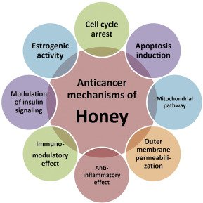 Illustration of Can People With Pancreatic Cancer Consume Honey?