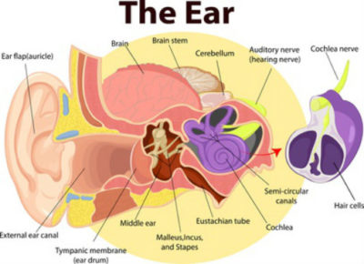 Illustration of Pain Near The Ear When Yawning?