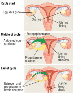 Illustration of Menstruation Becomes Large During Hormone Treatment?