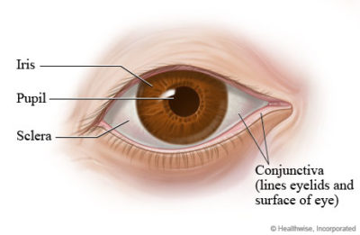 Illustration of There Is A Membrane On The Eyeball?
