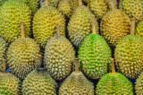 Consumption Of Durian When Using Braces?