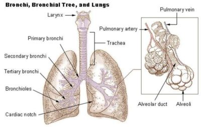 Illustration of The Cause Of Cough Is Accompanied By A Sore Throat And A Blood Clot Comes Out?