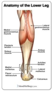 Illustration of Why Are The Calf Muscles And Ankles With The Body Out Of Balance?
