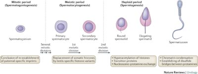 Illustration of Does The Remaining Small Sperm Alone If Exposed To Wounds Can Cause HIV?