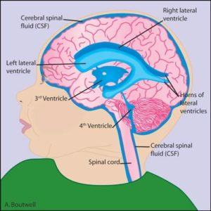 Illustration of The Size Of A Child's Left Brain Is Bigger Than The Right Brain?