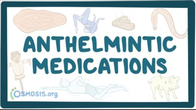 Illustration of Can You Take Anthelmintic Before Eating?