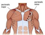 Tense Arm Muscles To Chest Pain?