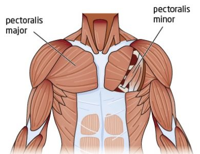 Illustration of Tense Arm Muscles To Chest Pain?