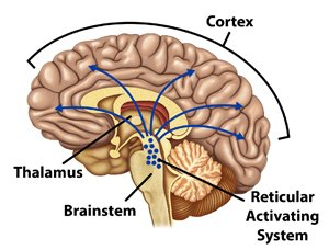 Illustration of Coma Due To An Accident And Bleeding In The Brain?
