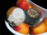 Danger Of Consumption Of Food Contaminated With Fungus?