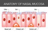 The Appearance Of Nasal Mucus Accompanied By Blood, Together With Headaches?