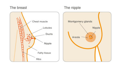 Illustration of The Possibility Of Developing Breast Cancer If It Does Not Provide Exclusive Breast Milk?