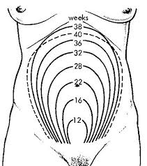 Illustration of Do You Feel Palpable During Pregnancy?