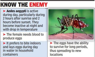 Illustration of Do Female Aedes Aegypti Mosquitoes Do Not Bite At Night?
