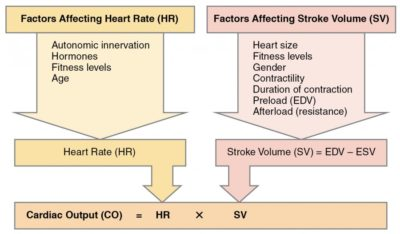 Illustration of The Relationship Between Stroke And Physiological Reflexes?