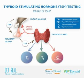 Illustration of How To Increase The TSH Hormone?
