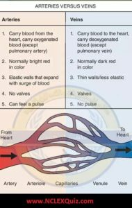 Illustration of Normally The Color Of Blood Vessels Is Different?