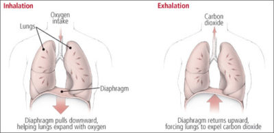 Illustration of Shortness Of Breath After Exhaling Lungs – Lungs?