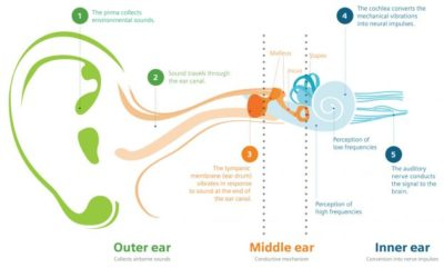 Illustration of Some Triggers For Hearing Loss?