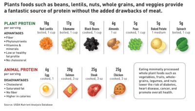 Illustration of Impact If Athletes Lack Vegetable Protein Or Animal Protein?