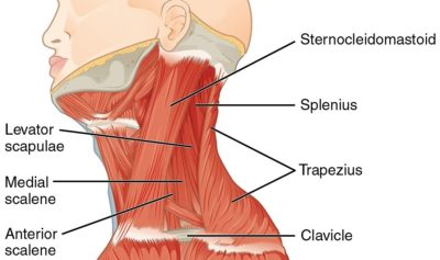 Illustration of Treatment For Headaches Accompanied By The Neck To The Shoulders?